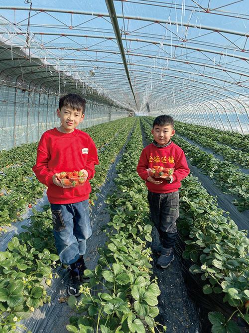 在日庄镇河头自然村草莓采摘添乐趣。.jpg