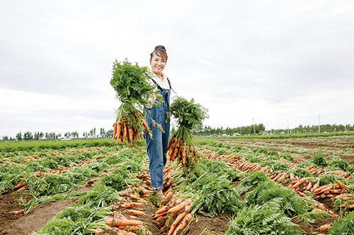 图为在店埠镇,刚从泥土中拔出的、个头匀称的胡萝卜,被整齐地码放在田垄上。农民们在地里,分工明确、各司其职,一片忙碌的丰收景象。.jpg