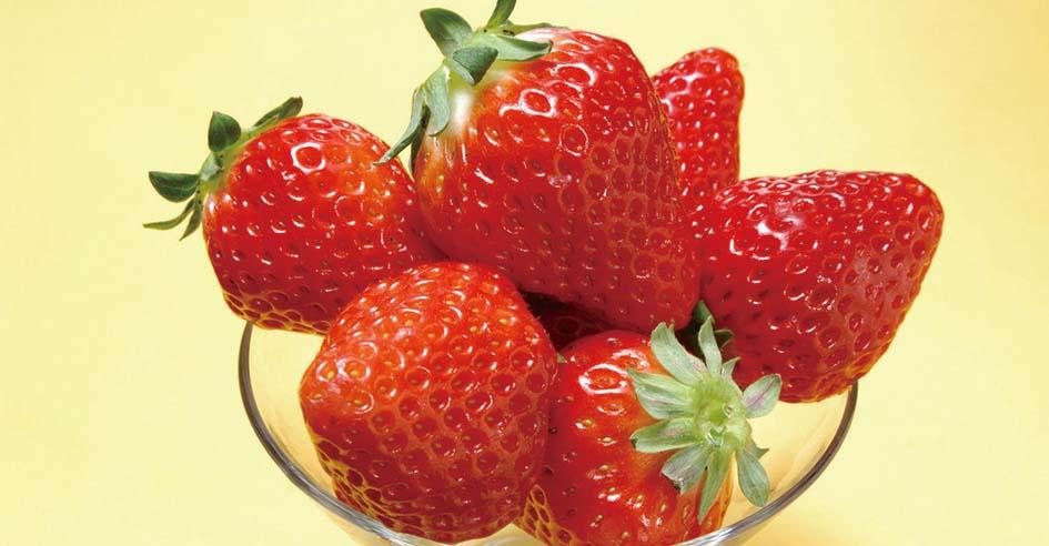 有机标准生产 草莓每斤卖到98元
