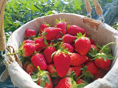 """""""莓""""好时光与你分享"""