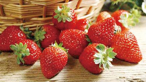 草莓园里春意浓