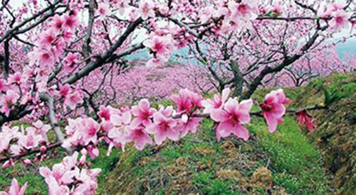 1,一年四季总是春 三月桃花美如霞.jpg