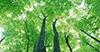 我市提前完成年度造林任务