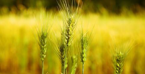 国际农产品智慧物流园项目和农产品商贸城项目开工奠基